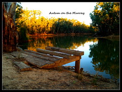 Autumn on the Murray river (bushman58929) Tags: australia travel bushman58929 olympus digital image tranquil