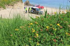 A Bird's eye view (JulieK (thanks for 7 million views)) Tags: commonbirdsfoottrefoil lotuscorniculatus wildflowers baginbunhead beach canoneos100d hggt green sea sand vehicle landrover rescue rnli wexford ireland irish 100flowers2018