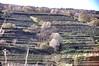 Terrassen-Weingärten und Obstblüte in der Wachau (Bockerl1) Tags: weingärten terrassenweingärten obstblüte österreich austria wachau vineyard