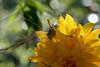 DSC_4094 (Oleg1961) Tags: tokina atx pro 100mm f28 d macro autumn flowers insects dew grass