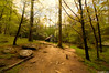 Noah Ogle Place (gusdiaz) Tags: nature naturephotography canon canonphotography 1018mm forest trees bosque hike trail sendero senderismo beautiful hermoso relaxing great smoky mountains montañas spring summer vacation trip