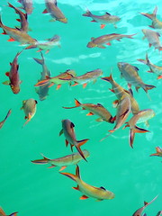 Fish (markb120) Tags: fish animal fauna water lake