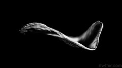 Petal (#Weybridge Photographer) Tags: adobe lightroom canon eos dslr slr mk ii studio black background low key monochrome flower petal mkii