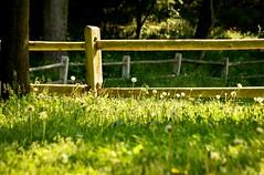 Cobbs Creek Park (joepiette2) Tags: parks streams creeks green fences reflections