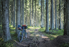 The Adventure (Antti-Jussi Liikala) Tags: bikepacking touring adventure mountain biking trek stache bikelife forest travel path suomi finland outdoor cycling bike trip