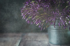 Purple Haze (Janet_Broughton) Tags: lensbaby velvet85 texture stilllife textured flowers allium