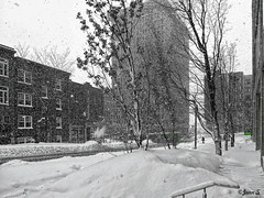 ... (Jean S..) Tags: snow snowstorm winter cold ice selectivecolor white green bus transit buildings