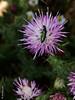 013205 - Insecto (M.Peinado) Tags: fauna insecto flora españa spain 02052017 mayode2017 2017 huaweyp9lite huawey ccby