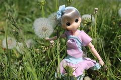 I love these flowers... (Ninotpetrificat) Tags: mamachapp mamachapptoy japantoy juguete muñeca anime asiandoll doll dollclothes pink puppe pinkandblue rosayazul dandelion japandoll hobby handmade cute kawaii obitsu toys