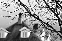 a tree and an old building (EllaH52) Tags: macro bokeh house building wooden tree branches twigs grayscale roof