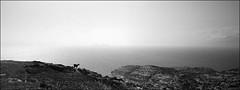 profilziege (fluffisch) Tags: fluffisch crete kreta matala greece hasselblad xpan panorama 45mmf40 rangefinder messsucher analog film adox silvermax