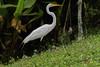 05-12-18-0017312 (Lake Worth) Tags: animal animals bird birds birdwatcher everglades southflorida feathers florida nature outdoor outdoors waterbirds wetlands wildlife wings