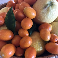 Kumquats (Melinda Stuart) Tags: tasty refreshing fruit citrus kumquat chinese asian sweetsour small orange