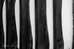 entre lineas... una vida (_DSC1664 ) (Rodo López) Tags: bembibre blancoynegro nikon naturaleza nature nostalgia naturebynikon elbierzo españa explore excapture detalles minimal minimalismo