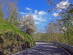 18050718735valtrebbia (coundown) Tags: gita tour statale stradastatale 45 ss45 valtrebbia trebbia natura boschi verde fiume