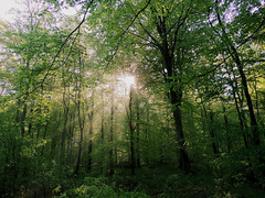 Morning Light In The Woods - 2/3 (M.L Photographie) Tags: forêt forest woods light morninglight arbres nature naturelovers arbre brume bois lumière tree trees normandy france normandie