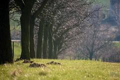 021_Moravian_Tuscany (Overtherainbow changes to KV Photography) Tags: katerinavodrazkova kvphotography landscape moravsketoskansko morava krajina moraviantuscany jiznimorava southmoravia moraviantoscana šardice