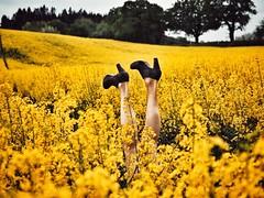 heads up (paddy_bb) Tags: olympusomd paddybb 2018 mft microfourthirds deutschland schleswigholstein norddeutschland germany spring rapeseed raps frühjahr