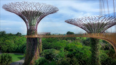 Golden Towers (kate willmer) Tags: towers building architecture trees walkway garden singapore