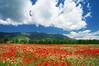 Природата на България! (sevdelinkata) Tags: sky grass flower poppy mountain field bulgaria