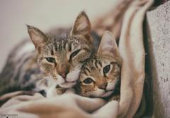 she adopted the little one! (George Spanoudakiss) Tags: fujifilm fuji fujiholic fujixseries fujinon fujimadness fujilove fujicamera fujiphotos fujilover fujix fujixpassion fujixt20 xt20 cat animals adorable family