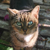 Key West (Florida) Trip 2017 0323Ri sq (edgarandron - Busy!) Tags: florida keys floridakeys keywest cat cats feral
