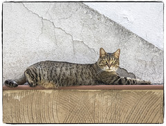 LINDA GATITA (BLAMANTI) Tags: gatos felinos gatita linda hermosa hermoso canon canonpowershotsx60 blamanti