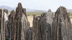 Fence Posts (magnetic_red) Tags: fence post wood wooden closeup grain worn