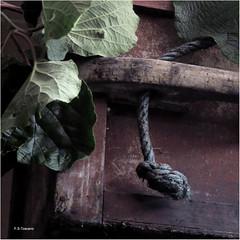 Texturas. Textures. (Esetoscano) Tags: texturas textures rudeza rudeness bodegón madera wood hojas leaves arte esetoscano