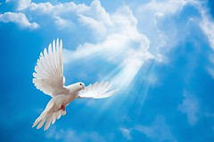 MUNDO CRISTÃO (CCPazeVida) Tags: dove sky air animal beautiful beauty bird blue clouds cloudy elegance feather flight fly flying free freedom grace high hope hopeful isolated love melody nature one peace perfection pigeon purity religion scene spirituality spread symbol symbols white wing wings ukraine