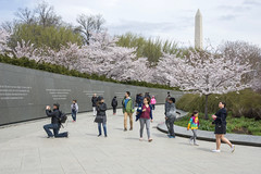 Wall of wisdom (Tim Brown's Pictures) Tags: washingtondc april spring blossoms trees cherrytrees cherryblossoms nationalmall tidalbasin mlkmemorial martinlutherking jrquotations washington dc unitedstates