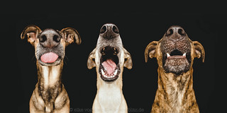 All good dogs come in threes - Nice Nosing You