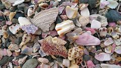 Rocks and shells from Japan (acase1968) Tags: jogashima shells rocks beach pacific ocean japan panasonic lx3 hermit crabs mollusca molluscs mollusks