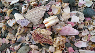 Rocks and shells from Japan