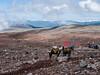 Horses on the way to Chimborazo (dealero) Tags: ecuador chimborazo riobamba mountains view