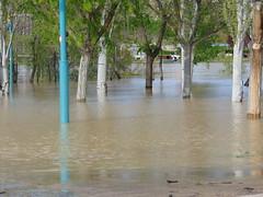 DSC06707 (Fotografías Gaby) Tags: rioebro ebro zaragoza crecida extraordinaria riada rio españa aragón