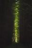 Dark Forest (Steven's Photo's) Tags: dark forest oxforshire mapledurham woods light stevenplows green avenue trees darkness reading