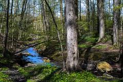 The creek (Jan Thomas Landgren) Tags: sweden sverige nature natur nikon nikond500 outdoor outdoors göteborg gothenburg wood woods forest landscape