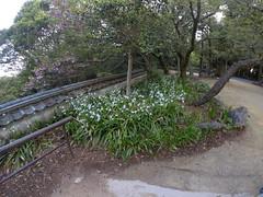 Nino flower _orig_LG (Hazbones) Tags: iwakuni yamaguchi yokoyama castle kikkawa suo chugoku mori honmaru ninomaru demaru wall armor samurai spear teppo gun matchlock map ropeway