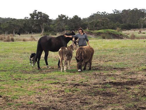 Sue & Animals II – Red Moon Sanctuary, Redmond, Western Australia