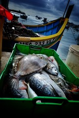 Catch Of The Day (Douguerreotype) Tags: boat luzzu water malta blue fish food