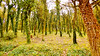 Into the Forest (Francesco Impellizzeri) Tags: forest panasonic landscape trees erice sicilia italy ngc