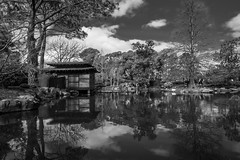 DSC00871 (Damir Govorcin Photography) Tags: reflections picturesque auburn botanic gardens sydney blackwhite wide angle natural light zeiss 1635mm sony a7rii clouds