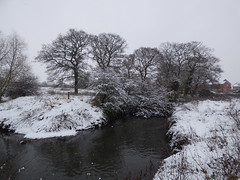 Cold (Lexie's Mum) Tags: snow snowfall december2017 cold winter fun laughter tree trees branches river anker
