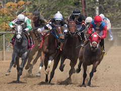 2018 Best Pimlico Racetrack (1) (maskirovka77) Tags: pimlico dirt mare race racehorse threeyearold turf yearling