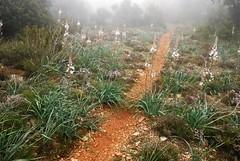 Flores y niebla (Xaviort) Tags: flores camino niebla