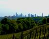 Frankfurt (david_m.hn) Tags: frankfurt skyline weinberg vineyard landscape urban stadt hessen deutschland germany
