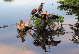 Mangrove Moment