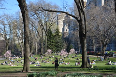 New York_ 4383 (mart.panzer) Tags: nyc 2018 spring flowerage city us bestof gerhardpanzer impressions photos pictures highlights vacation holidays people mustsee awesome cities scenic top attractions must see best beautiful newyorkcity newyork manhattan