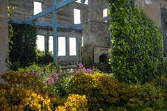 Warden's House (San Francisco Gal) Tags: ruins brick house alcatraz wardenshouse ivy jadeplant valerian succulent
